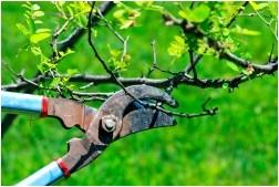 Все просто —  Обрезка деревьев и кустарников  || STROIM-GRAMOTNO.RU